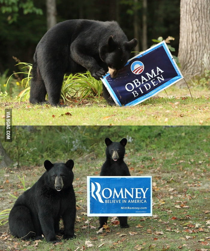 The bears are not big fans of Obama.