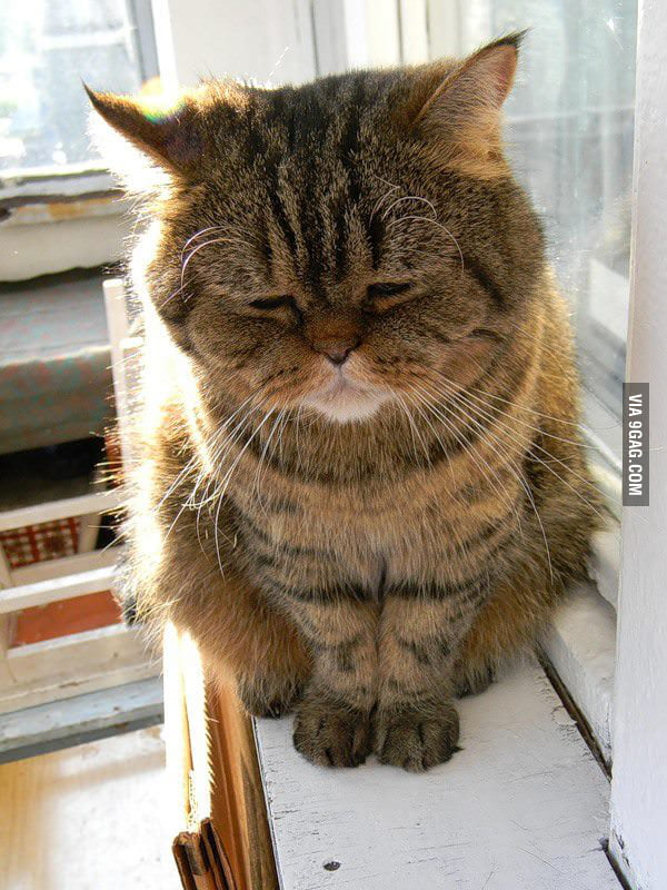 Highly depressed cat