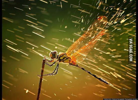 A dragonfly in the rain.
