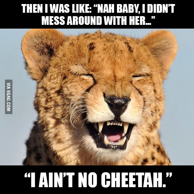 That cheetah guy...