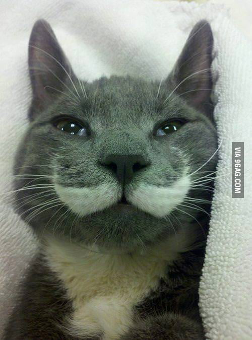 Like a Sir Cat!
