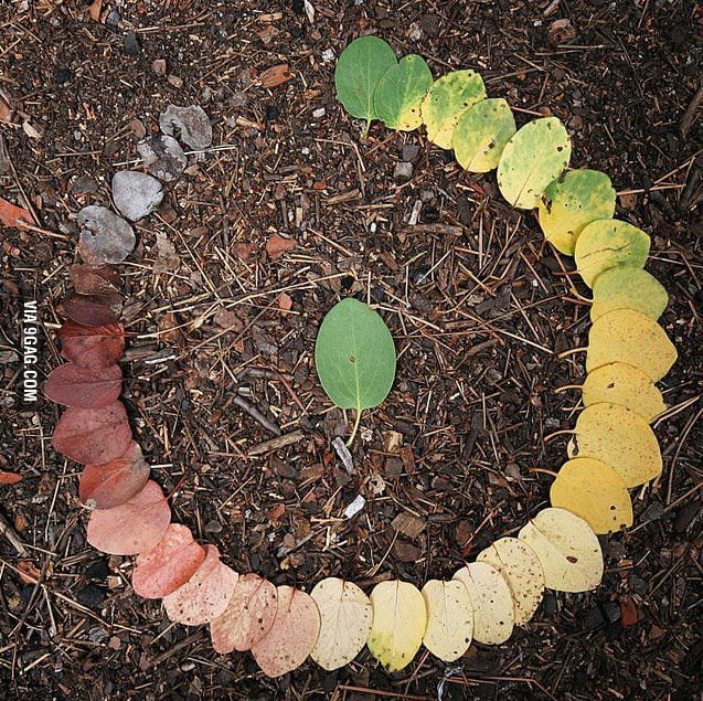A leaf lifecycle