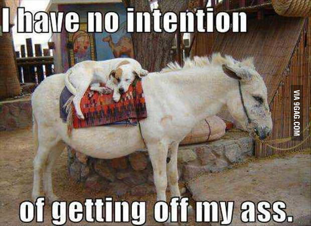 I Have No Intention....
