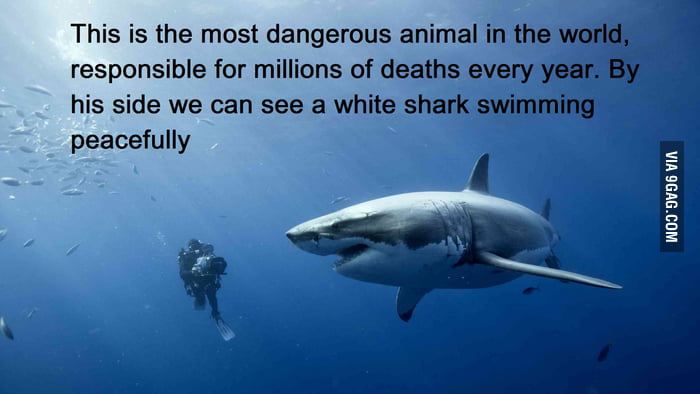 The Most Dangerous Animal in the World