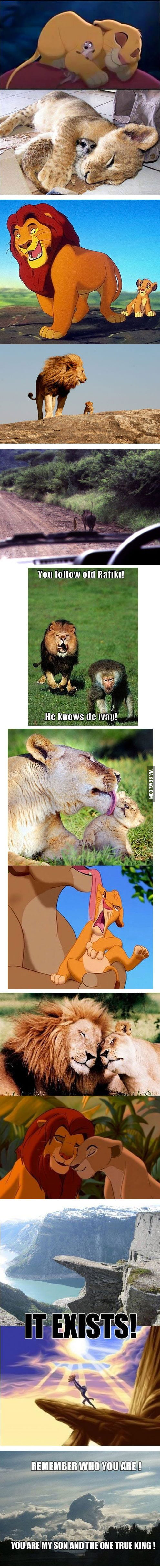 The lion king in real life