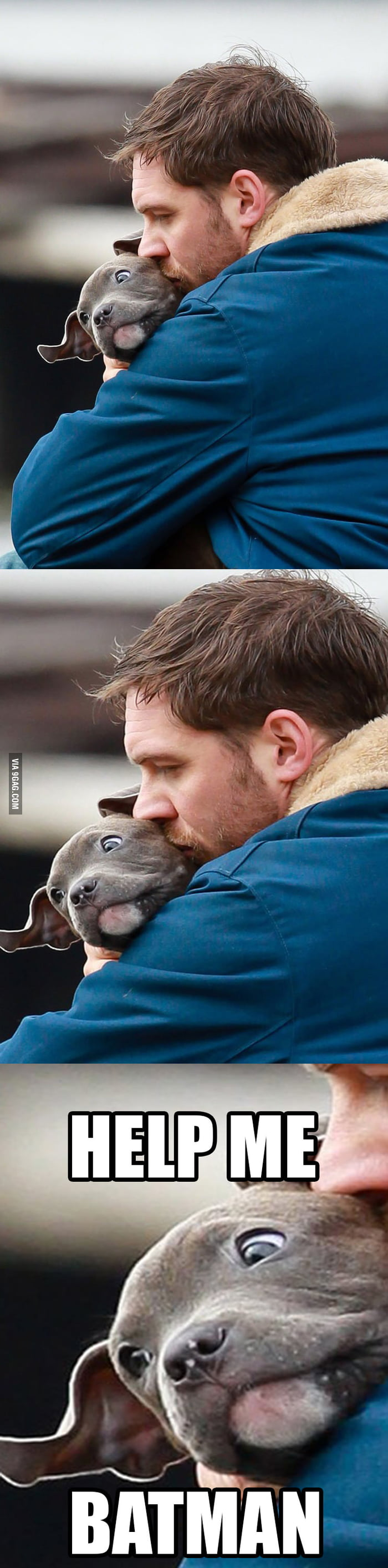 Bane is a dog lover.