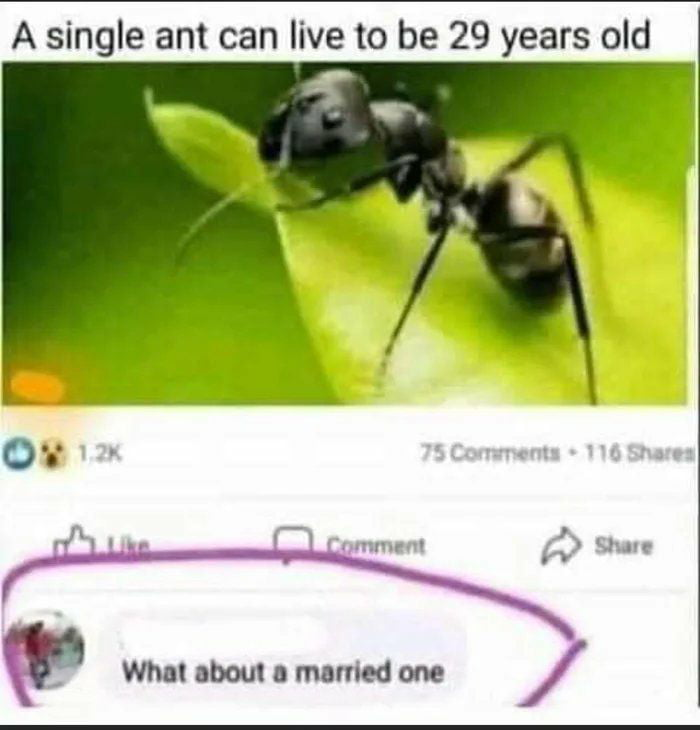 Very innocent question..