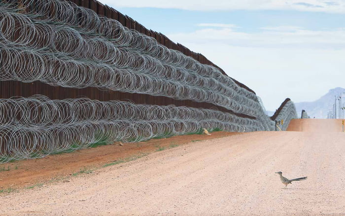 Roadrunner in front of the border wall, award for the best bird photography of of the year.