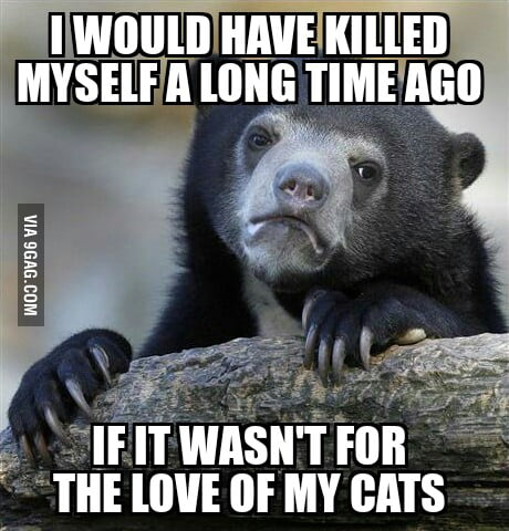 Sad but true... Being a crazy cat lady is okay with me