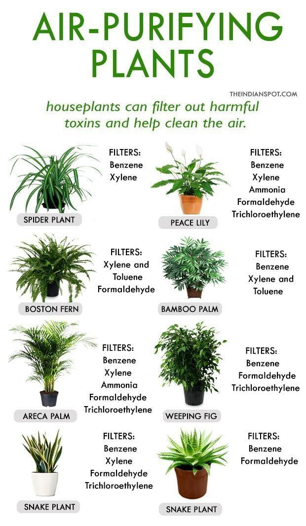 Air-purifying plants for home space. Iterior design. Home Decor. GPD