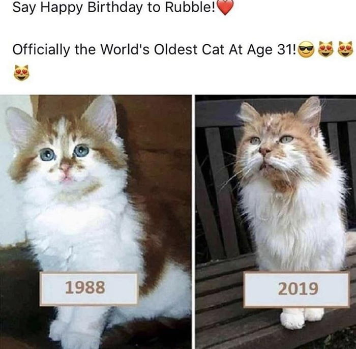 Happy birthday Rubble