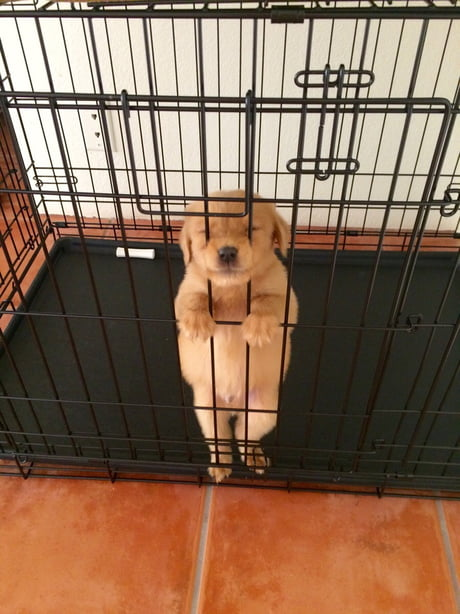 Please let pupper free, promise no more chew shoes!