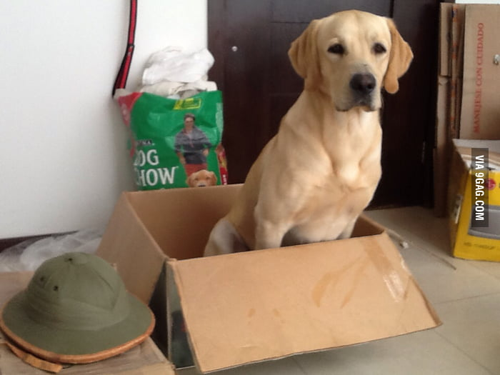 Dogs like boxes too...