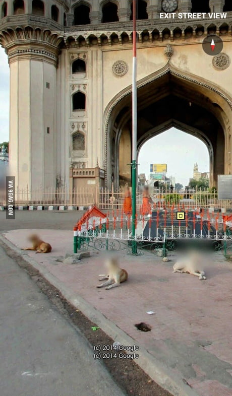 So Google blurs the faces of stray dogs too! Why just why?