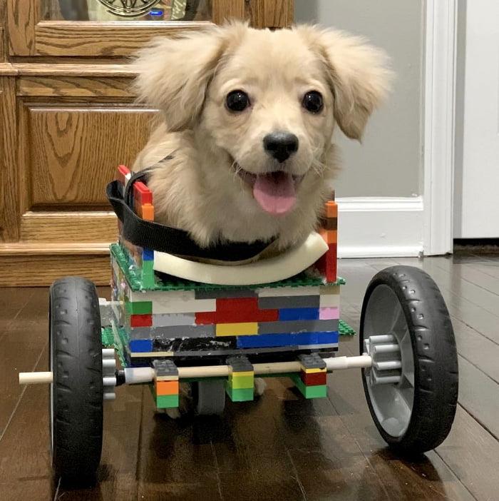 wheelchair dog lego