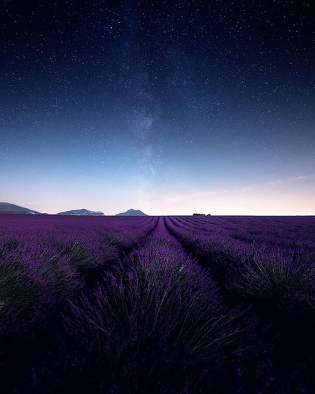 Lavender by Night (France) 1