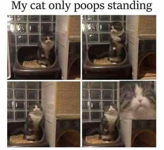 Talented pooping cat