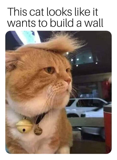 Trump Cat Wow Look At That
