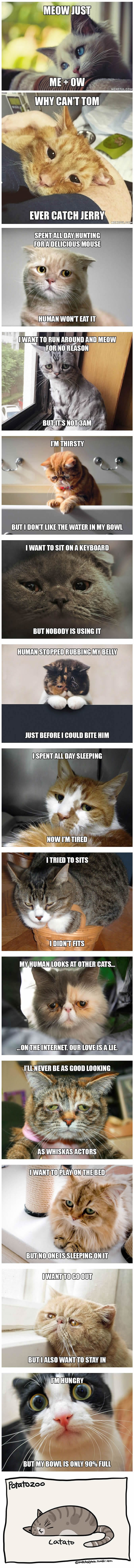 Heartbreaking First World Cat Problems That Hooman Probably Never Realized