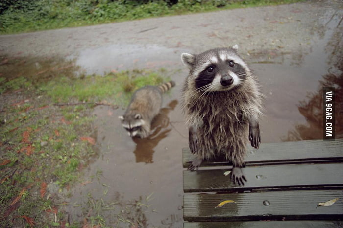 Do you mind if we play in your puddle?