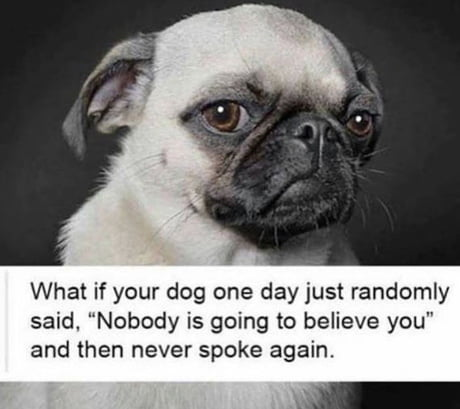 11 Dog & Cat pictures that will make you Laugh YAO