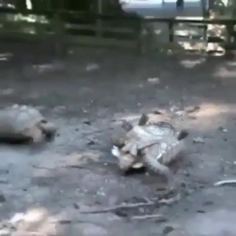 Turtle Bro to the rescue
