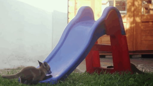 Fox cubs (vs) slide