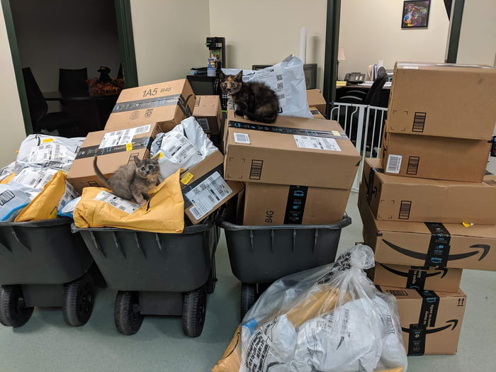 Animal Shelter Uses Rice Filled Socks to Keep Kittens Warm. They Were Running Low, and Linked to Their Amazon Wishlist on Facebook. This Was the Result!