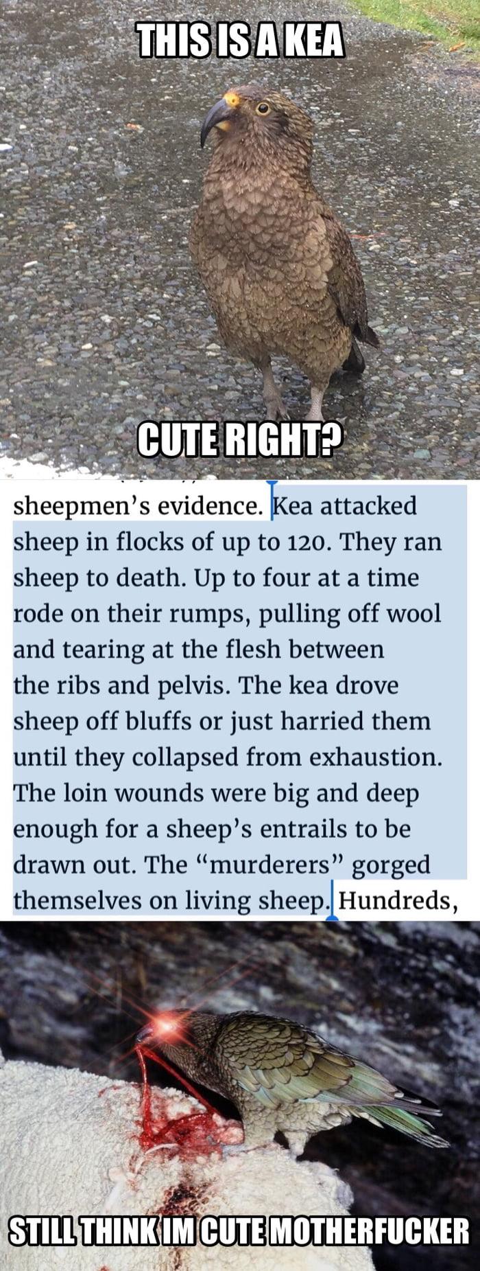 Keas are pretty brutal
