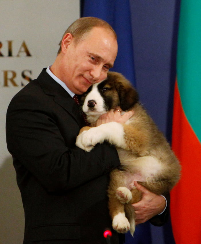 Putin received a new dog for his birthday, a name needed for his new pet