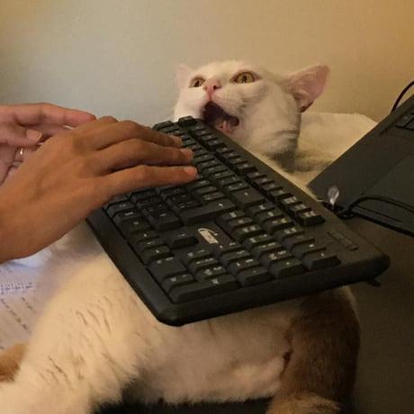 Webcam Dicke puerto-ricanische Chaturbate