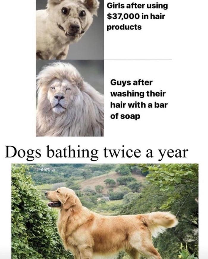 Dogs are superior