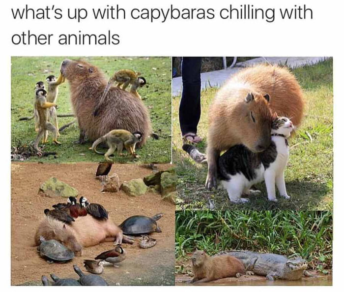 Blessed animal