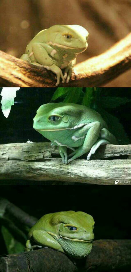 What kind of pepe is this?