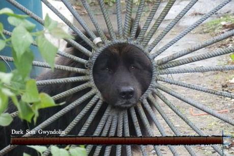I am the sun god!
