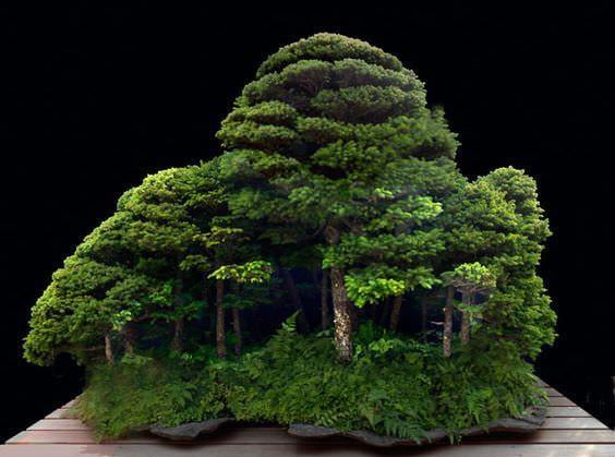 This Bonzai tree looks like a forest