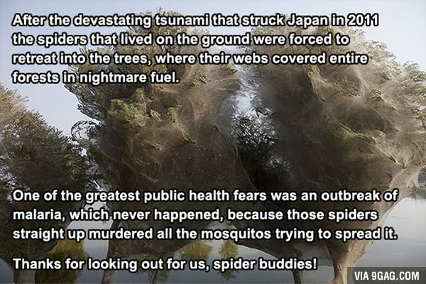 So spiders are not so