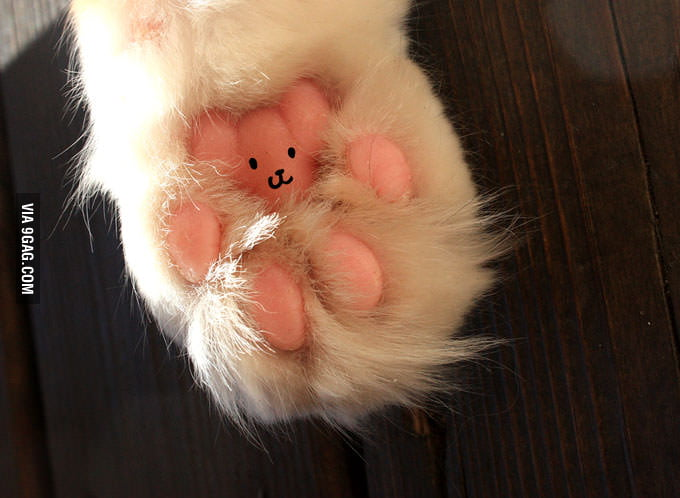 I will never look at my cat's paws the same