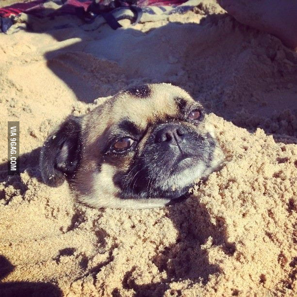 A rare species known as a SUG (sandpug). It spends most its life underground.
