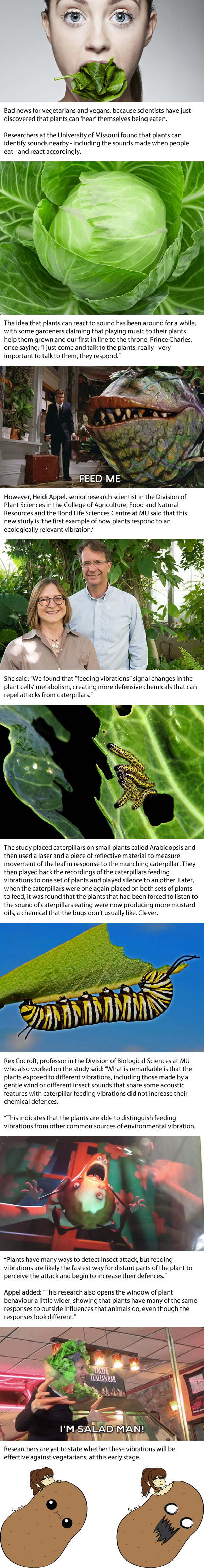 Bad news for vegetarians! Plants can 'hear' themselves being eaten - and become defensive when attacked
