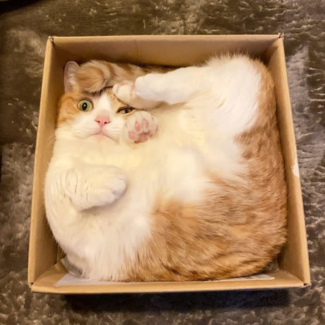 Awesome There's somehing about how the cat perfectly fits in that box… Oddly satisfying?