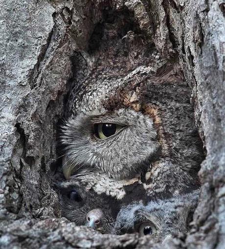 Awesome How many owls?