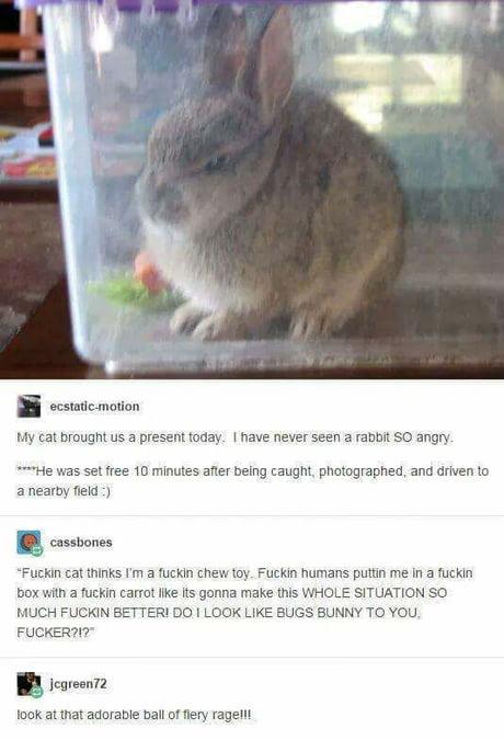 Rabbit pissed off My boyfriend