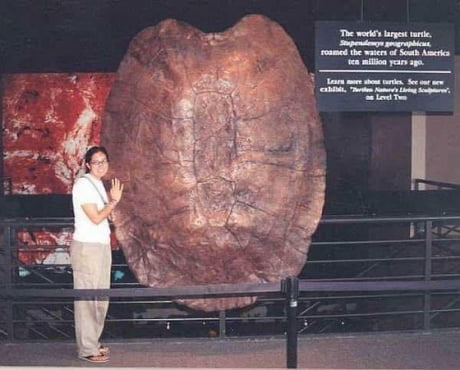 10 million years ago turtles could eat you with a single bite 1
