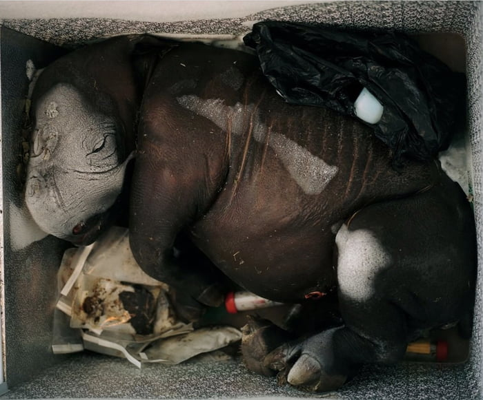 Baby Rhino killed and thrown into a bin in Kenya...