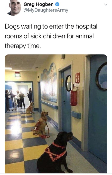 The best kind of therapy!