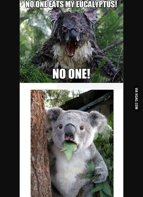 Wet Koala 9gag