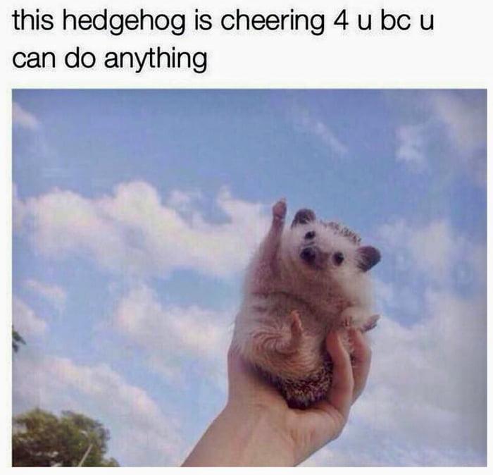 Hedgehog is cheering 4 u