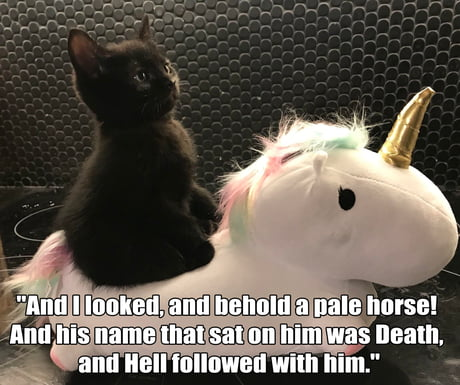 Beware the fluffy cat of death!