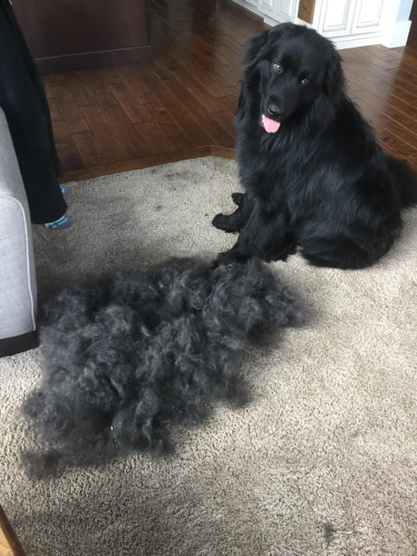 One good brushing can avoid so much vacuuming